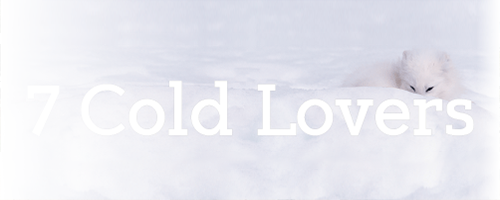 7 cold lover